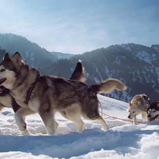 Wildlife Adventure Event – Huskys